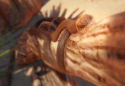 Australische bruine slang