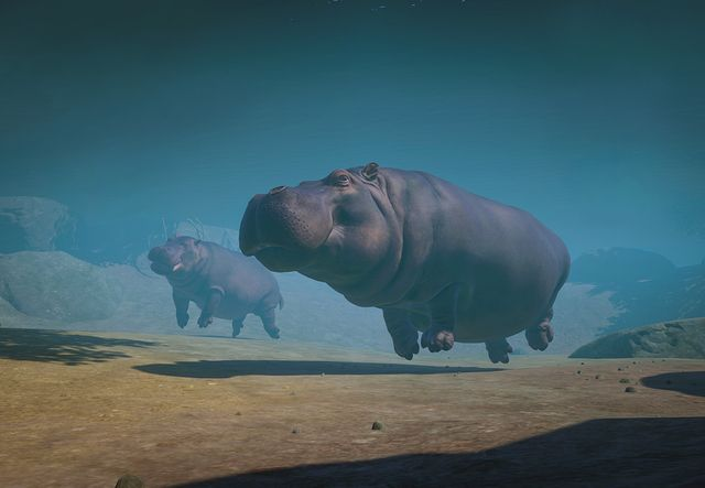 A New Hippo-thesis