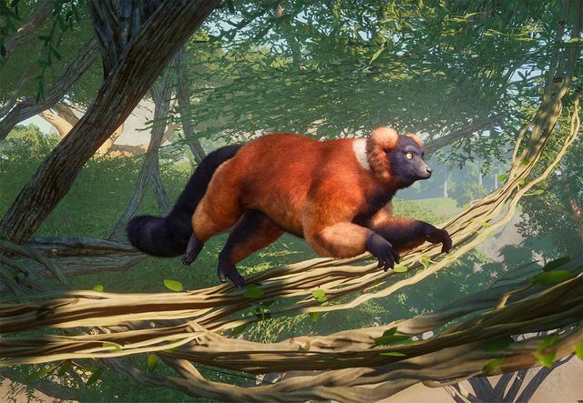 Lively Lemurs