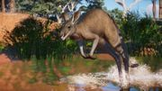 Planet Zoo: Australia Pack - Kangaroo - 02