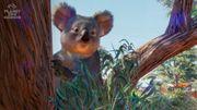 Planet Zoo: Australia Pack - Koala - 01