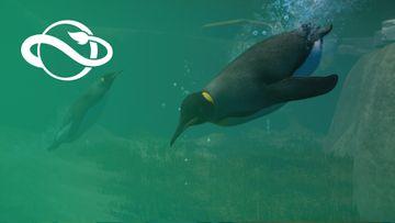 Aquatic Pack Announce Trailer