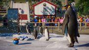 Planet Zoo: Aquatic Pack - Penguin 02