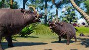 Southeast Asia Animal Pack - Babirusa 01