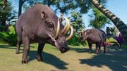 Southeast Asia Animal Pack - Babirusa 02