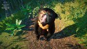 Southeast Asia Animal Pack - Sun Bear 01