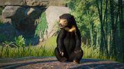 Southeast Asia Animal Pack - Sun Bear 03