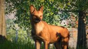 Southeast Asia Animal Pack - Dhole 02