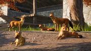 Southeast Asia Animal Pack - Dhole 03
