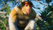 Southeast Asia Animal Pack - Proboscis Monkey 02