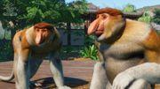 Southeast Asia Animal Pack - Proboscis Monkey 03