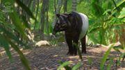 Southeast Asia Animal Pack - Tapir 01
