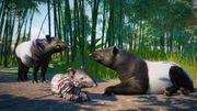Southeast Asia Animal Pack - Tapir 02