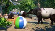 Southeast Asia Animal Pack - Tapir 03
